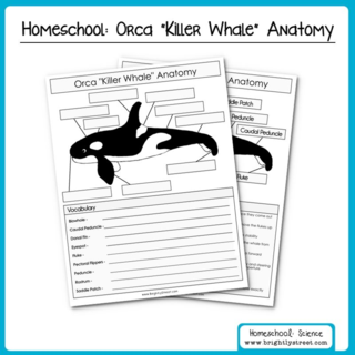 Brightly Street Homeschool Science Orca Killer Whales Unit sample 001 (Sheet 1)